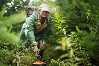 Man foraging for mushrooms in forest