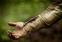 Salamander climbing man's arm