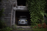 Classic car in wooden garage with ladder leading to attic and climbing vine 11100006097| 写真素材・ストックフォト・画像・イラスト素材|アマナイメージズ