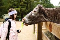 Girl (8-9) feeding cow 11100009785| 写真素材・ストックフォト・画像・イラスト素材|アマナイメージズ