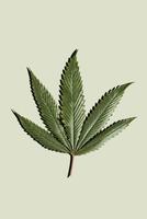 Marijuana leaf 11100010644| 写真素材・ストックフォト・画像・イラスト素材|アマナイメージズ