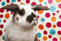Bunny against polka dotted background