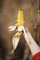 Person holding corn comb