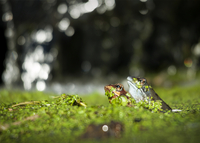 Close-up of frogs in pond