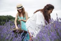 Friends harvesting flowers 11100018032| 写真素材・ストックフォト・画像・イラスト素材|アマナイメージズ