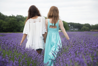 Rear-view of friends walking in lavender field