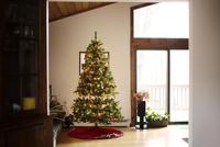 Christmas tree in living room 11100018568| 写真素材・ストックフォト・画像・イラスト素材|アマナイメージズ