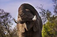 African elephant mudbathing