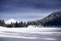 View of forest in winter 11100025409| 写真素材・ストックフォト・画像・イラスト素材|アマナイメージズ