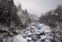 Rocky river in forest in winter