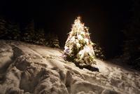 Decorated tree in forest at night 11100029079| 写真素材・ストックフォト・画像・イラスト素材|アマナイメージズ