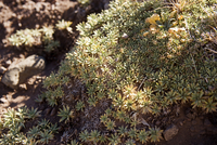 ?View of succulent plant