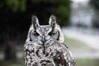 Close up of owl