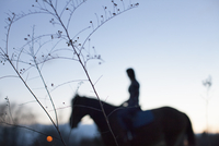 Silhouette of woman riding horse