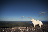 Russia, White dog with rolling landscape in background