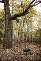 Tire swing hanging in forest 11100032043| 写真素材・ストックフォト・画像・イラスト素材|アマナイメージズ
