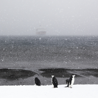 Penguins on iceberg during snow