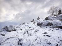 USA, Massachusetts, Magnolia, Hill in winter