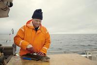 Fisherman gutting dead fish