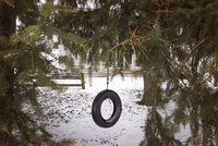 Tire swing in back yard 11100033705| 写真素材・ストックフォト・画像・イラスト素材|アマナイメージズ
