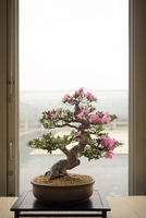 Flower plant on table by glass door
