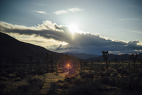 Scenic view of Joshua Tree National Park during sunset