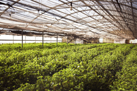 Interior of greenhouse