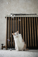 Cat playing with bubbles at home