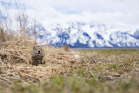 Squirrel on field by mountain during winter