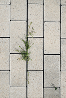 Overhead view of plant on concrete footpath