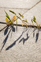 Close-up of plants growing on concrete footpath