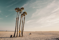 People walking by palm trees on beach against sky