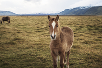 Portrait of horse standing on grassy field