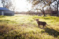 Tabby cat on field during sunny day
