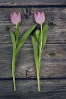 Overhead view of pink tulips on wooden table