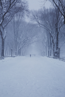 Snow covered footpath amidst bare trees at park