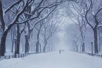 Snow covered footpath amidst bare trees