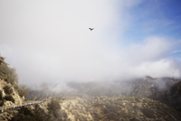 Scenic view of bird flying over landscape against cloudy sky