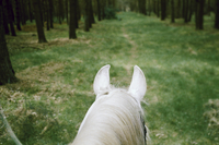 Horse on grassy footpath in forest