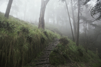 Footpath in forest during foggy weather