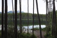 Reflection lake amidst forest