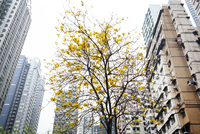 Low angle view of yellow flowers growing on tree in city