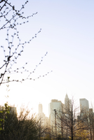Trees and city buildings against clear sky