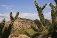 Cactuses on field against wind turbines