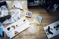 Overhead view of artificial insects and papers on wooden table