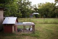 Chicken in coop on field