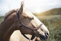 Close-up of horse at farm