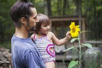 Father carrying daughter touching sunflower