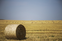 Bale of hay on filed against clear sky