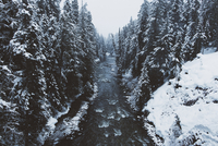 River amidst snow covered trees in forest